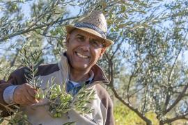 Oliven ernten – und das Öl nach Hause nehmen